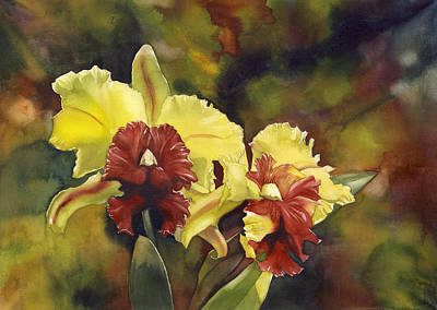 Yellow And Red Cattleya Orchids Print by Alfred Ng