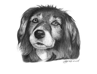 Pet Portraits Drawing - 027 - Miss Mindy by Abbey Noelle