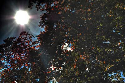 Falls Photograph - 03 Autumn Star Burst by Michael Frank Jr