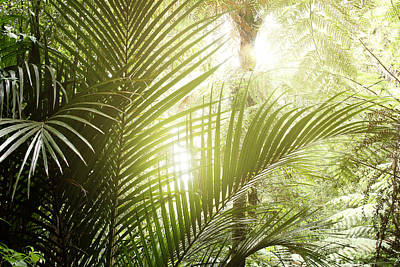 Lush Photograph -  Jungle Light by Les Cunliffe