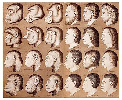 Eugenics Photograph - 1870 Haeckel Racist Human Illustration by Paul D Stewart
