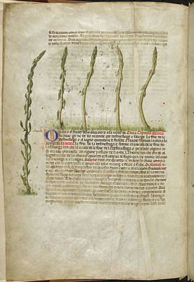 A Herbal Book Of Plants And Remedies Print by British Library