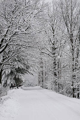 A Snow Covered Road Lined With Leafless Print by David Chapman