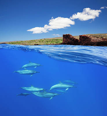 A Split View Of Spinner Dolphin Print by Dave Fleetham