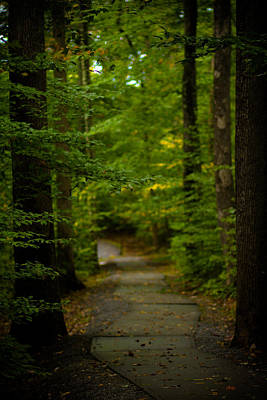 Virginia Photograph - A Walk In The Woods by Shane Holsclaw