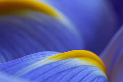 Tulpe Photograph - Abstract by Juergen Roth