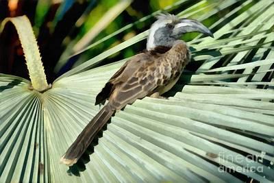 Hornbill Painting - African Grey Hornbill by George Atsametakis