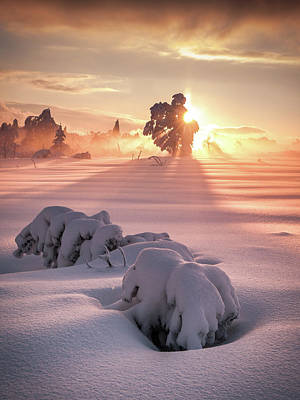 Winter Trees Photograph - After The Storm by Andreas Wonisch