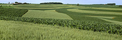 Agriculture - Contour Strips Of Mid Print by Timothy Hearsum