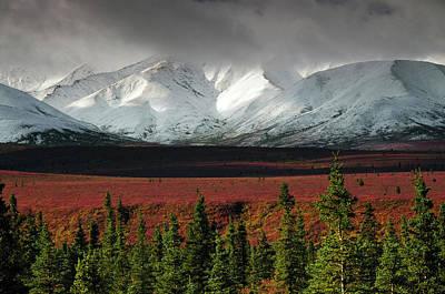 Alaska Range In Autumn, Taiga, Tundra Print by Michel Hersen