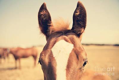 Horse Photograph - All Ears by Erin Johnson