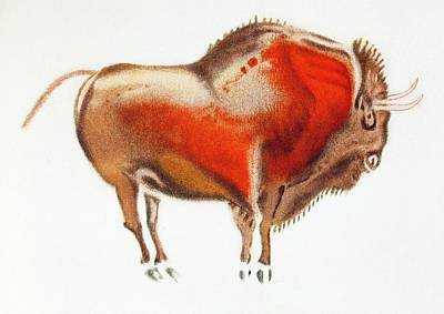 Bison Photograph - Altamira Bison Cave Painting by Paul D Stewart