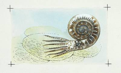 Ammonite Photograph - Ammonite by Deagostini/uig