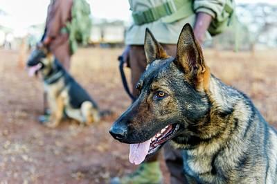 Anti-poaching Dog Patrol Print by Peter Chadwick