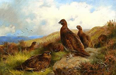 Grouse Painting - Red Grouse by Archibald Thorburn