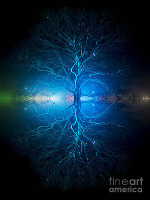 Tree Spirit Photograph - As Above So Below by Tim Gainey