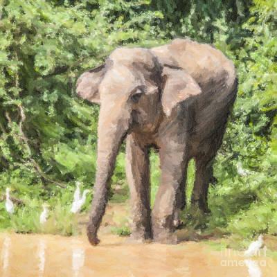 Elephant Digital Art - Asian Elephant Elephas Maximus by Liz Leyden