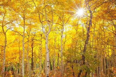 Golden Light Photograph - Aspen Morning by Darren  White