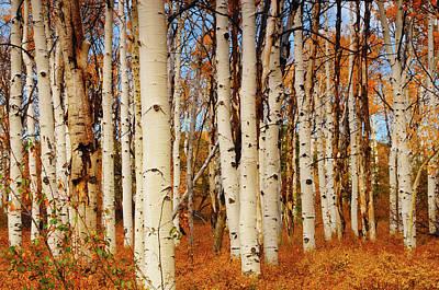 Zion National Park Photograph - Aspens In Autumn, Zion National Park by Michel Hersen