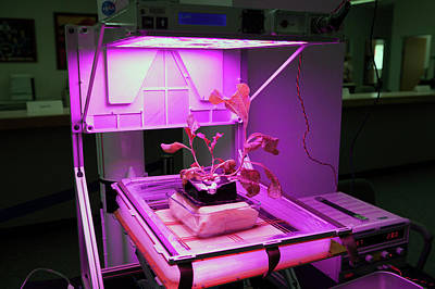 Romaine Photograph - Astronaut Vegetable Production System by Nasa