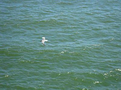 Swim Photograph - Atlantic City - 01139 by DC Photographer