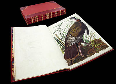 Wild Turkey Photograph - Audubon's The Birds Of America by Natural History Museum, London