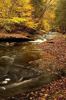 Tree Roots Digital Art - Autumn And Creek by Amanda Kiplinger