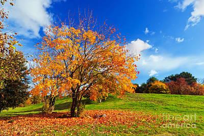 Branch Photograph - Autumn Fall Landscape by Michal Bednarek