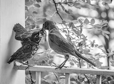 Bird And Worm Photograph - Baby Robin - Yummy by Steve Harrington