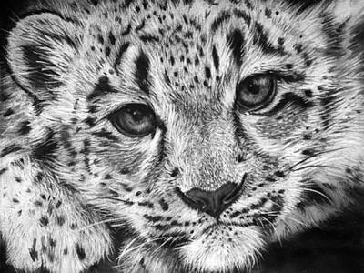 Leopard Drawing - Baby Snow Leopard by Sharlena Wood