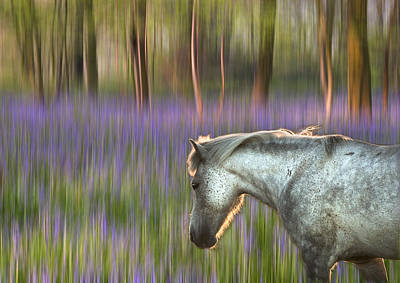 Backlit Pony Walking Through Blurred Bluebell Forest Fantasy The Print by Matthew Gibson