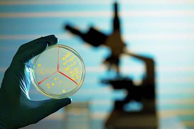Bacterium Growing On Petri Dish Print by Wladimir Bulgar