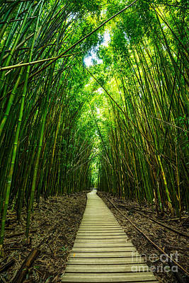 Bamboo Forest Photograph - Bamboo Forest by Jamie Pham