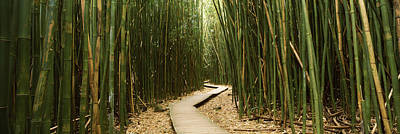 Bamboo Forest Photograph - Bamboo Forest, Oheo Gulch, Seven Sacred by Panoramic Images