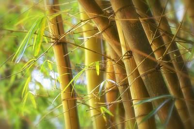 Bamboo Gold Print by Jade Moon