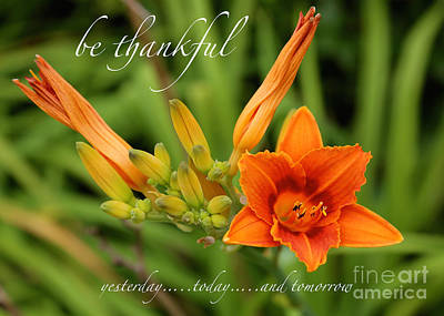 Lilies Photograph - Be Thankful by Carol Groenen