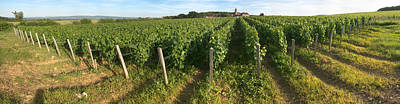 Beaujolais Photograph - Beaujolais Vineyard, Montagny by Panoramic Images