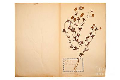 Beautiful Dried Vintage Flowers Print by Jochen Schoenfeld