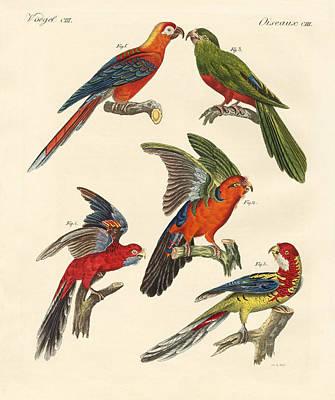 Macaw Drawing - Beautiful Parrots by Splendid Art Prints