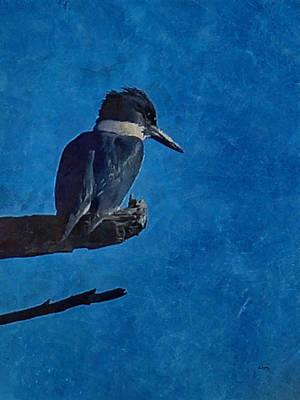 Kingfisher Digital Art - Belted Kingfisher by Ernie Echols
