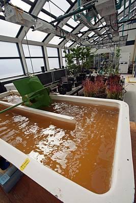 Algal Photograph - Biofuel Research by Jim West