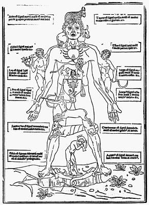 1493 Photograph - Bloodletting Chart, 1493 by Granger