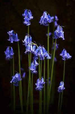 Blue Bells Print by Svetlana Sewell
