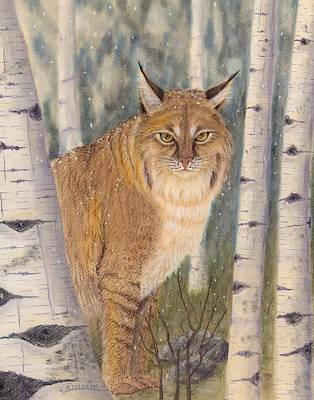 Bobcat Painting - Bobcat In Birches by Cristolin O