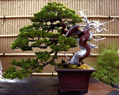 Bamboo Fence Painting - Bonsai Tree And Bamboo Fence by Elaine Plesser