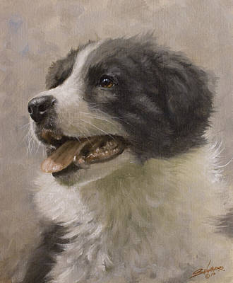 Border Collie Pup Portrait IIi Print by John Silver