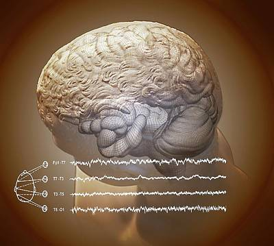 Spatial Photograph - Brain And Hippocampus by Zephyr