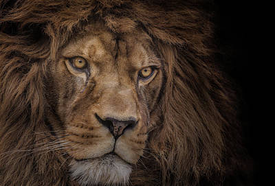 Strong Photograph - Brink Of Extinction by Ashley Vincent