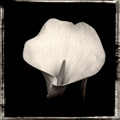 Black And White Photograph - Brooklyn Lily  by Frank Winters