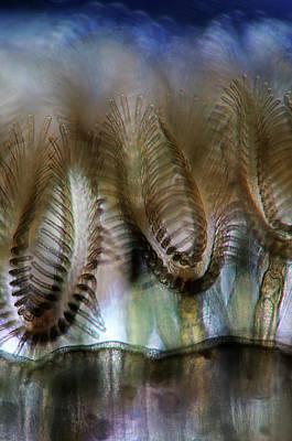 Filter Feeders Photograph - Bryozoans by Marek Mis